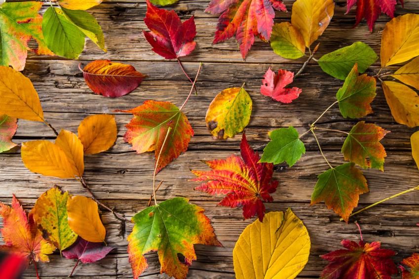 Herbstdeko Mit Heidekraut : Herbstdeko aus Naturmaterialien: Kastanien ...